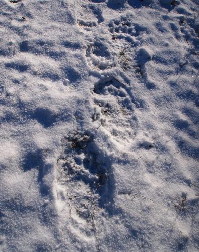 Bear steps