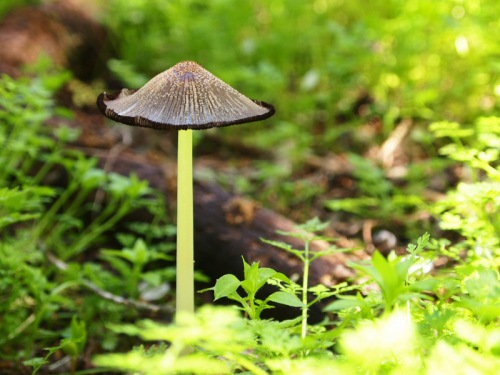 Spring fungi
