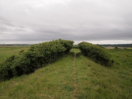 Hedge path
