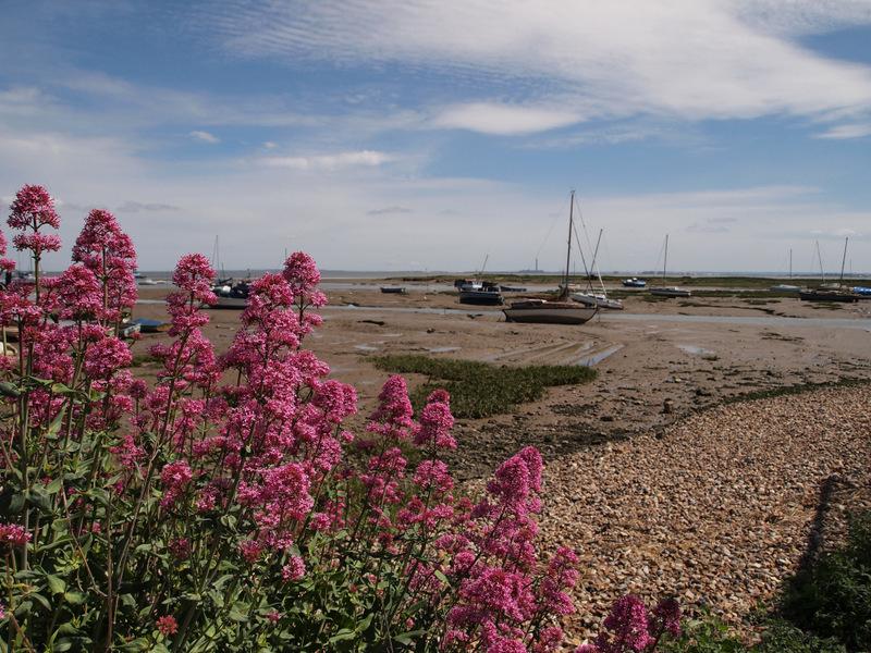 Estuary boats