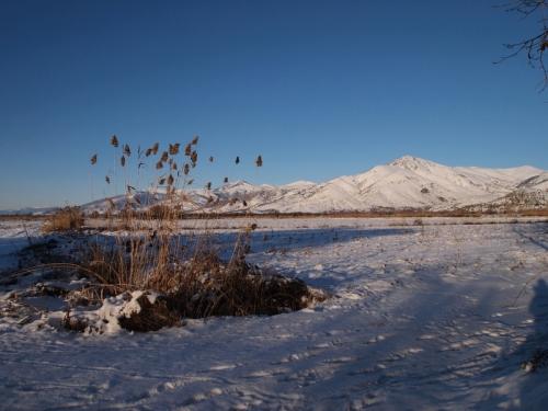 Snow on the plain