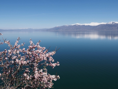 Blossom season, Great Prespa Lake
