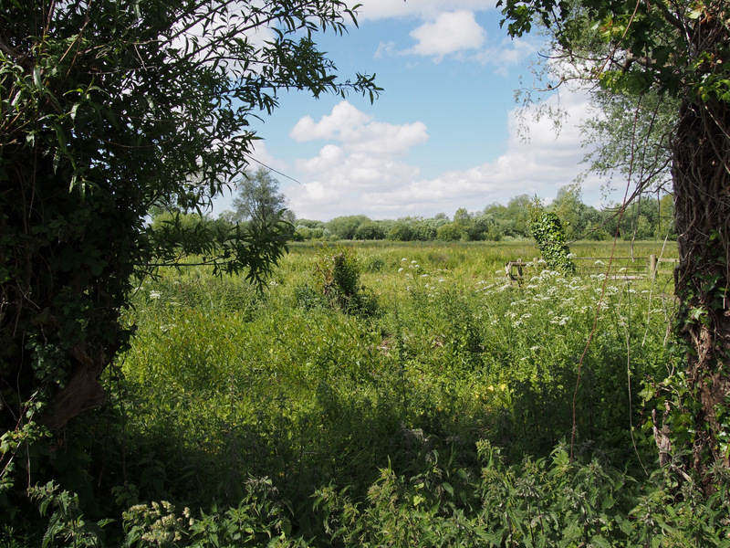 Magor Marsh