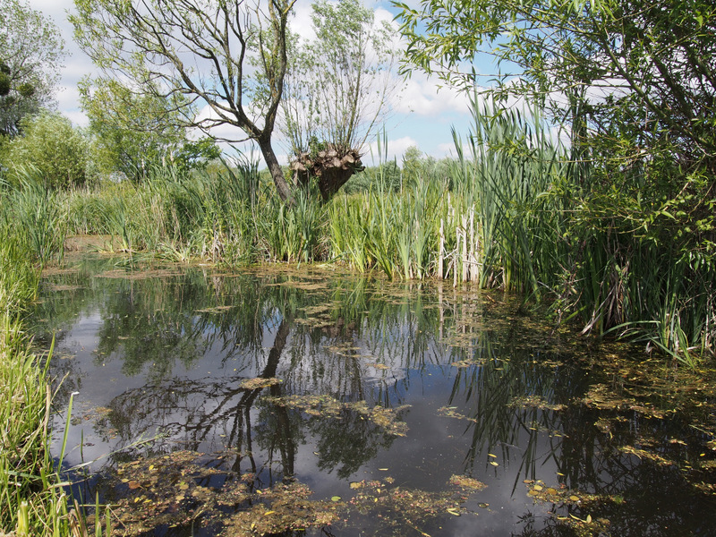 Magor Marsh reen