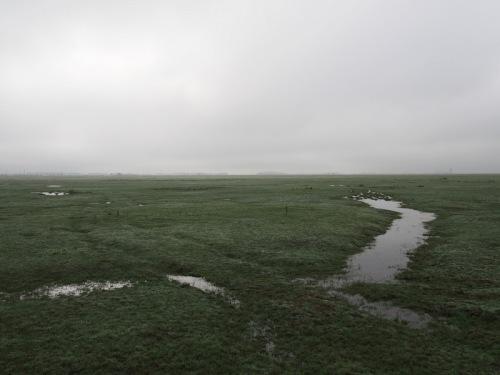 Wet puszta