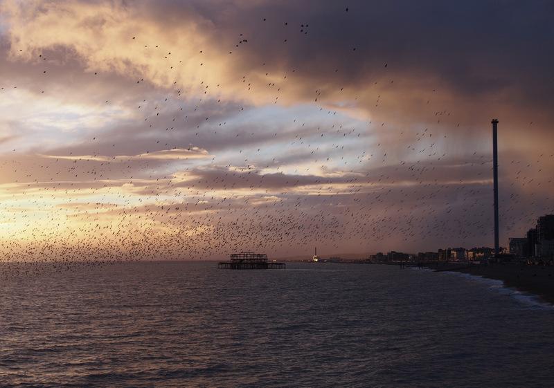 Murmuration, Brighton Pier