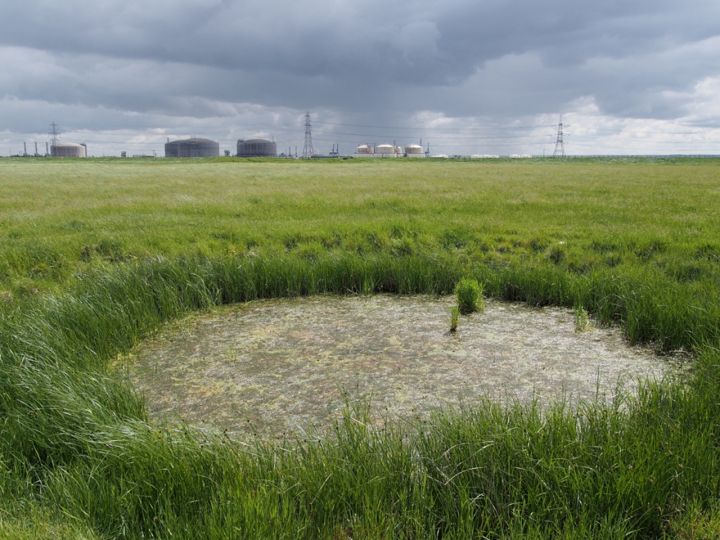 Bomb crater, Allhallows Marsh
