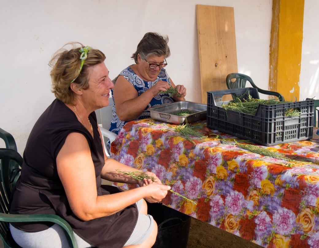 Isabel Ariza and relative cleaning salicornia