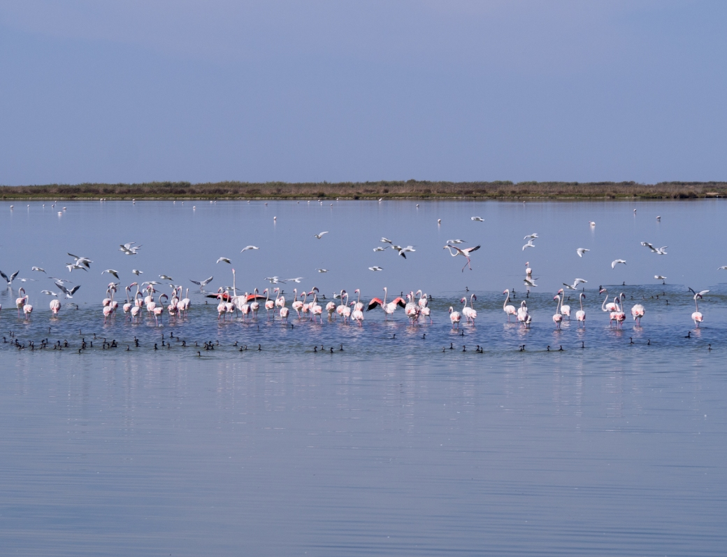 Flamingos in old salt pans