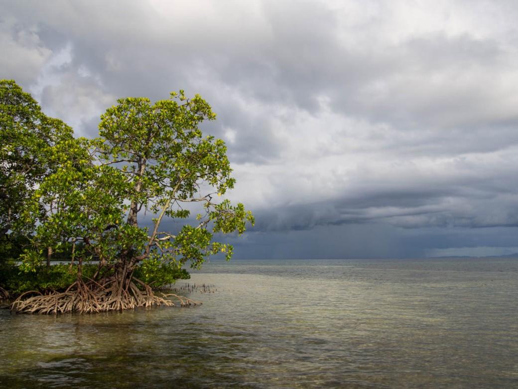 Bangka Island and mangroves